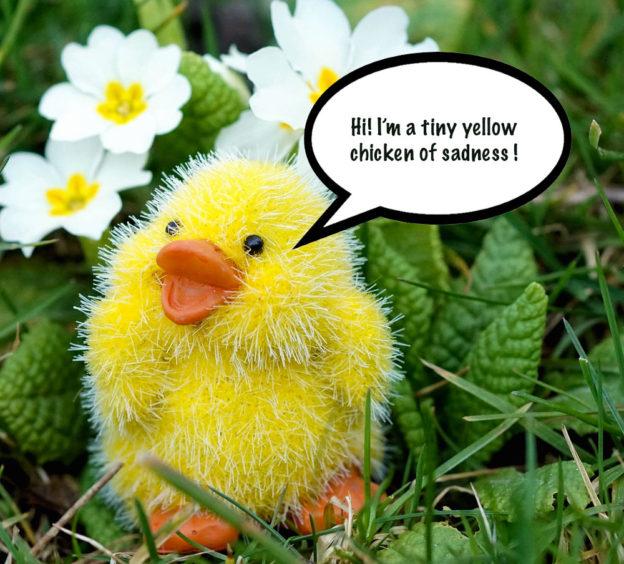 tiny chicken sympathy